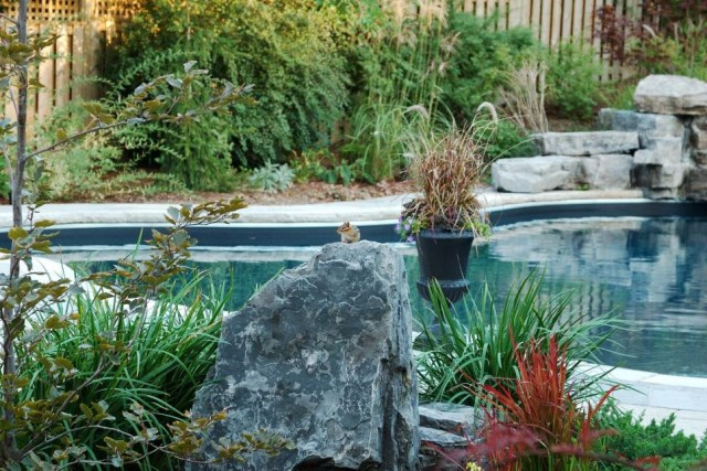 18-landscaping-around-the-swimming-pool (11)