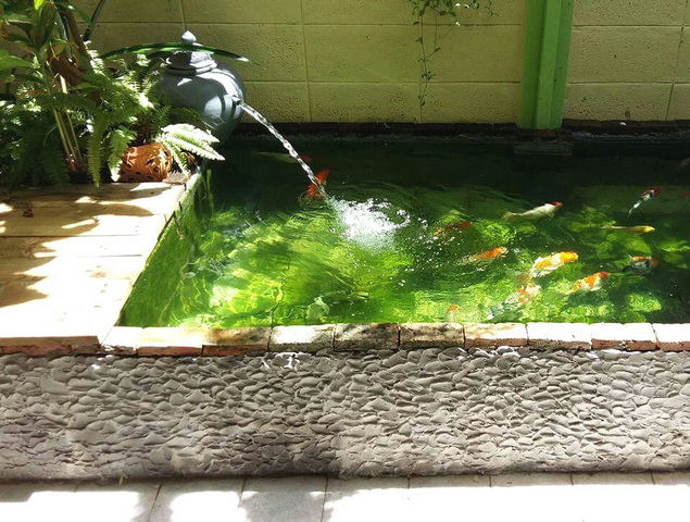 1k fish pond diy review (1)