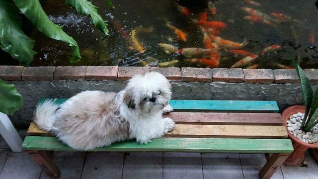 1k fish pond diy review (13)
