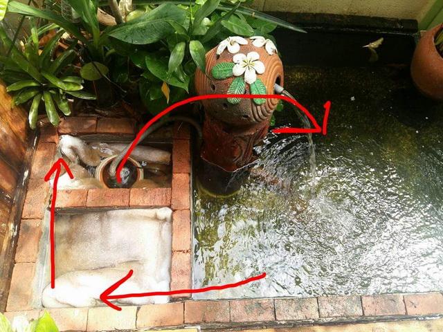 1k fish pond diy review (14)