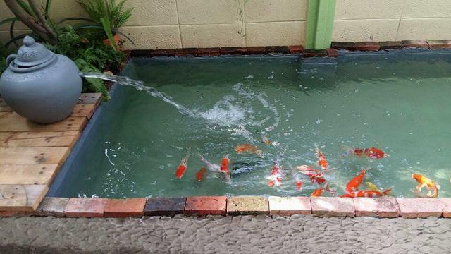 1k fish pond diy review (7)