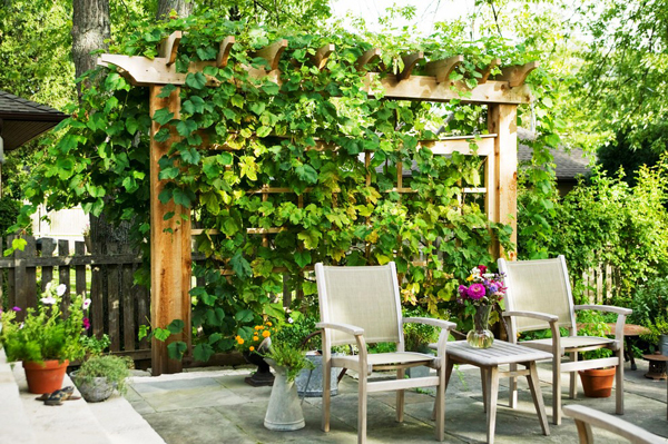 20-beautiful-and-natural-grape-arbor-ideas (13)
