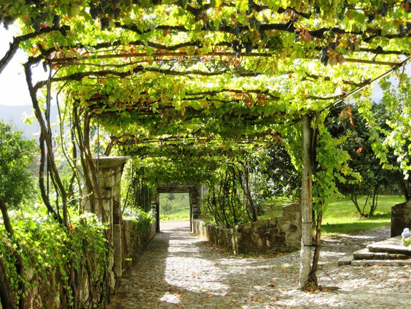 20-beautiful-and-natural-grape-arbor-ideas (14)