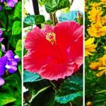 """แนะนำ 24 """"ไม้ดอกสีสวย"""" เหมาะสำหรับปลูกในกระถาง ประดับบ้านและสวน"""
