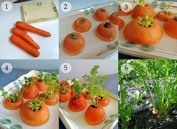 24 vegetables that can be revived (1)