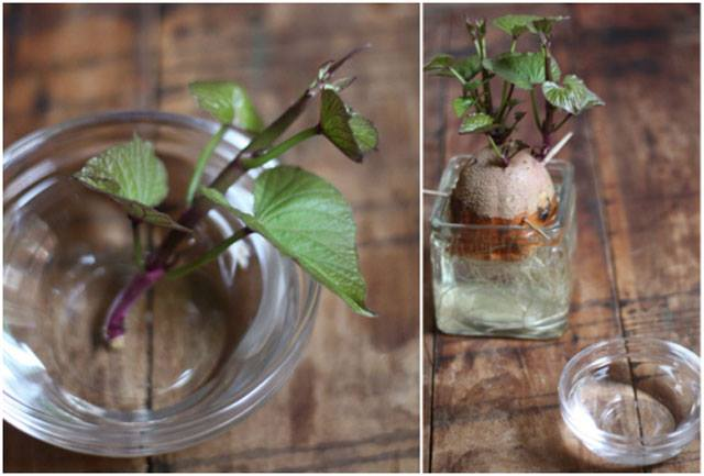 24 vegetables that can be revived (12)
