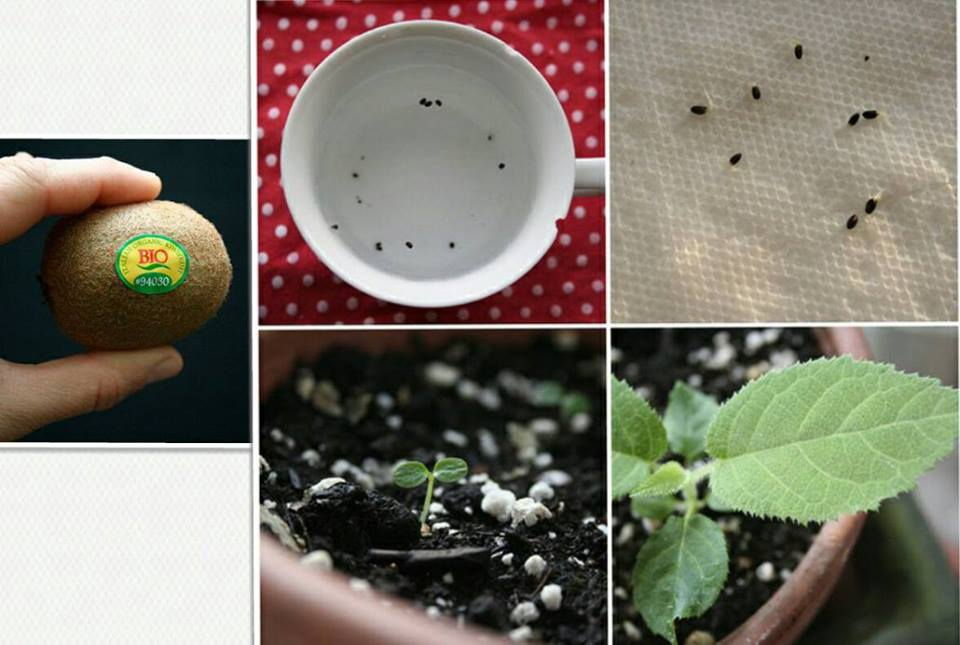 24 vegetables that can be revived (17)