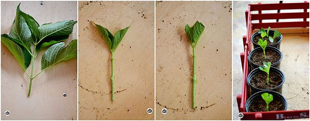 24 vegetables that can be revived (18)