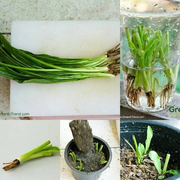 24 vegetables that can be revived (21)