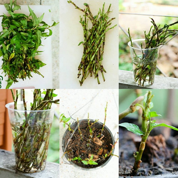 24 vegetables that can be revived (22)