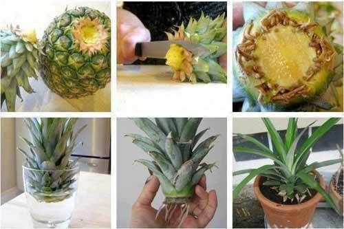 24 vegetables that can be revived (3)