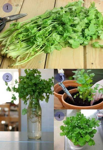 24 vegetables that can be revived (7)
