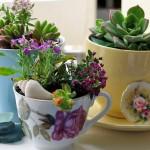 """จัดสวนในบ้าน  : เปลี่ยนแก้ว/ถ้วยกาแฟ ที่ไม่ใช้แล้ว ให้กลายเป็น """"กระถางต้นไม้"""""""