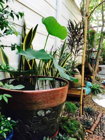 diy-beautiful-garden (102)