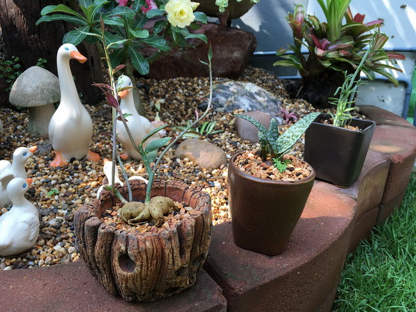 diy-beautiful-garden (58)