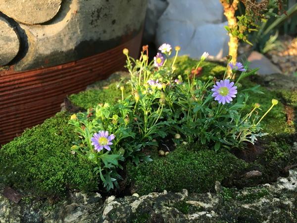 diy-beautiful-garden (64)