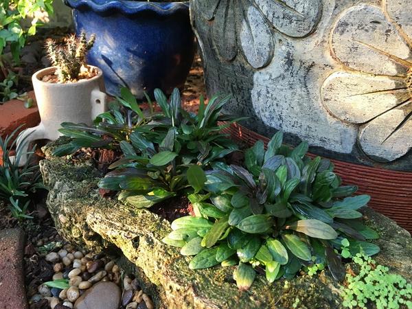 diy-beautiful-garden (66)