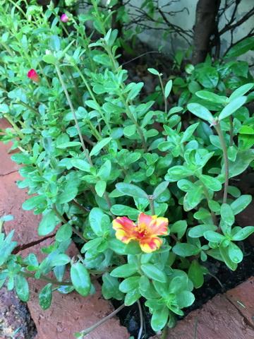 diy-beautiful-garden (78)