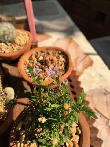 diy-beautiful-garden (80)