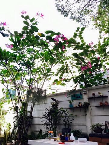 diy-beautiful-garden (82)