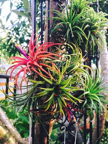 diy-beautiful-garden (83)