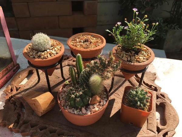 diy-beautiful-garden (93)