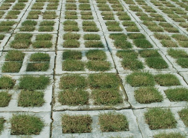 grass paver for courtyard (16)