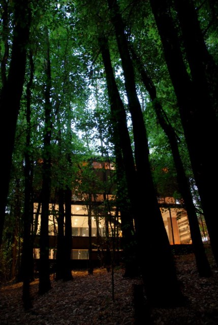 modern-cabin-house-surrounded-with-nature (3)