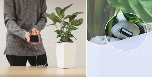 photosynthesis-phone-charger (1)