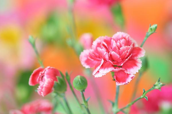 12 fortune flowers (13)