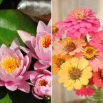 12 ดอกไม้มงคลประจำราศี เหมาะสำหรับปลูกในบ้าน เสริมดวงชะตาให้ชีวิตราบรื่น