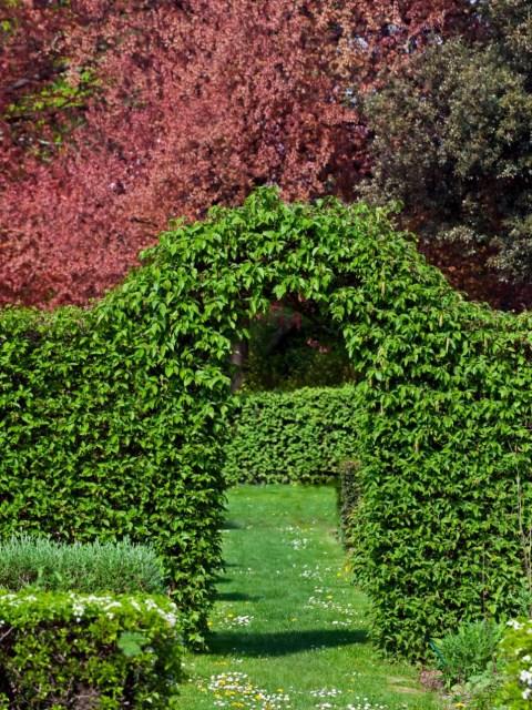 25 ideas for the garden with shrubs (16)