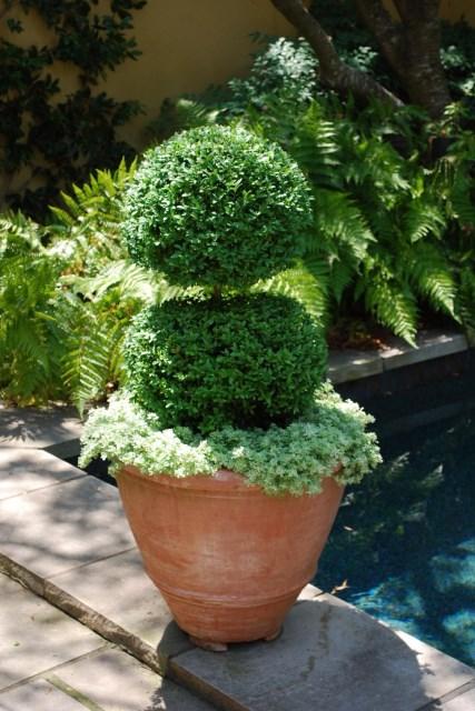 25 ideas for the garden with shrubs (20)