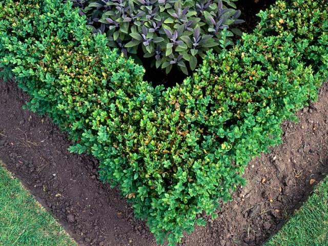 25 ideas for the garden with shrubs (4)