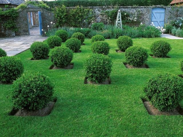25 ideas for the garden with shrubs (8)