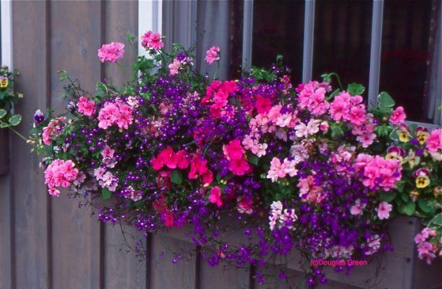 28 flowers balcony decoration ideas (15)