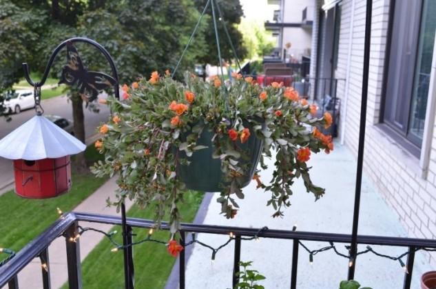 28 flowers balcony decoration ideas (3)