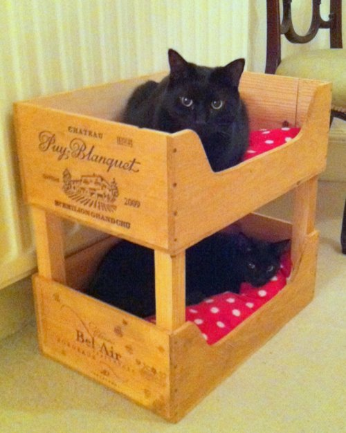 30-ideas-to-make-cool-cozy-bed-for-cat (1)