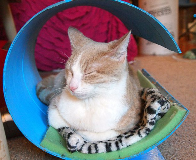30-ideas-to-make-cool-cozy-bed-for-cat (27)
