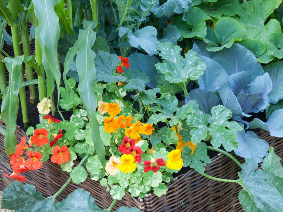 31 ideas for vegetable gardens and gardens (21)