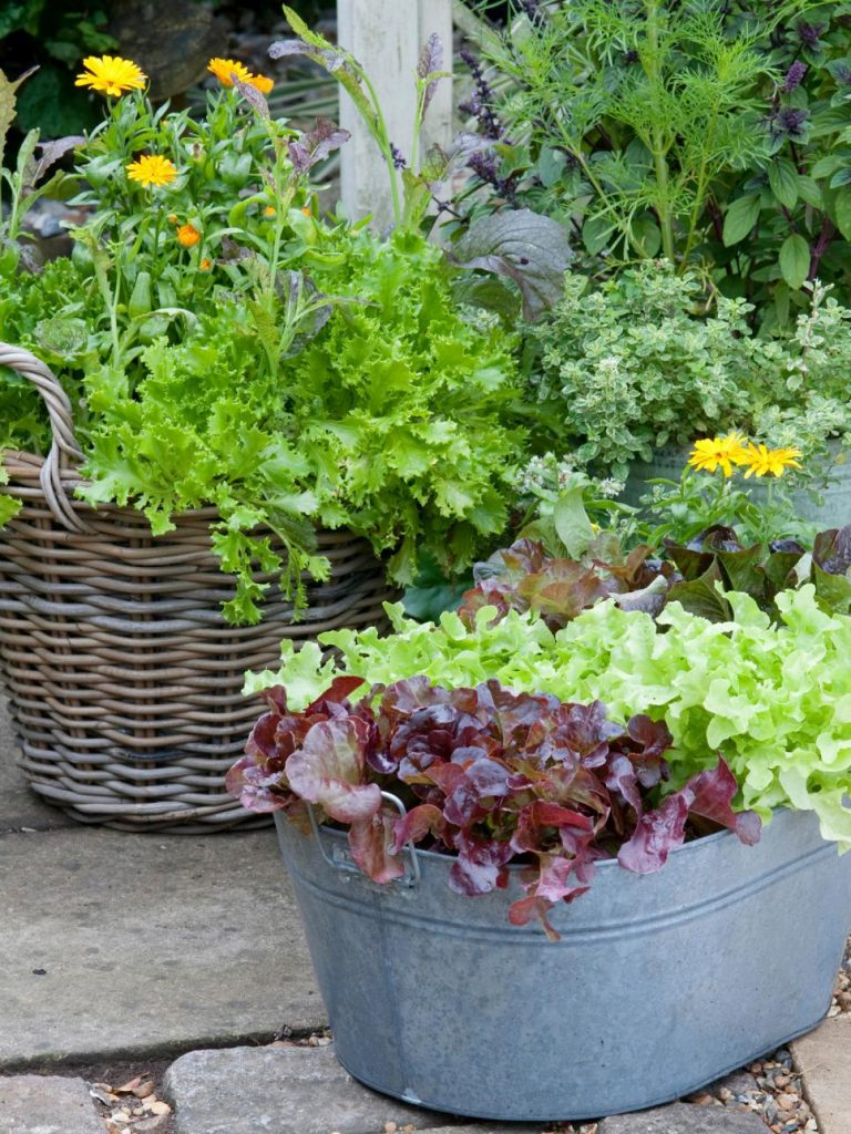 31 ideas for vegetable gardens and gardens (22)