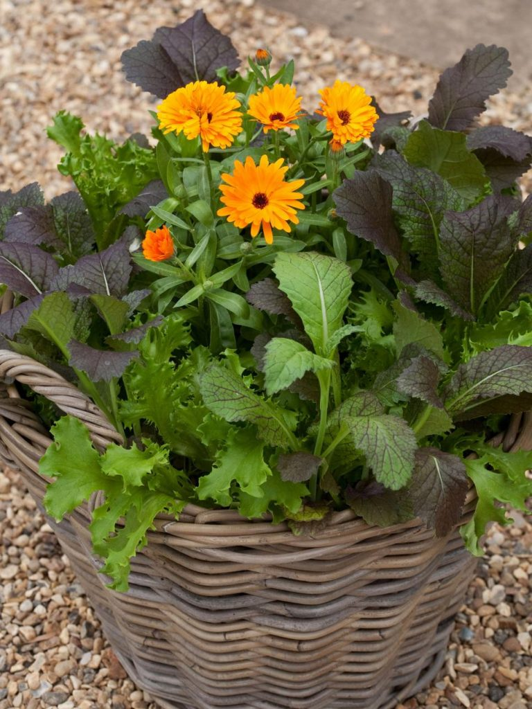 31 ideas for vegetable gardens and gardens (24)