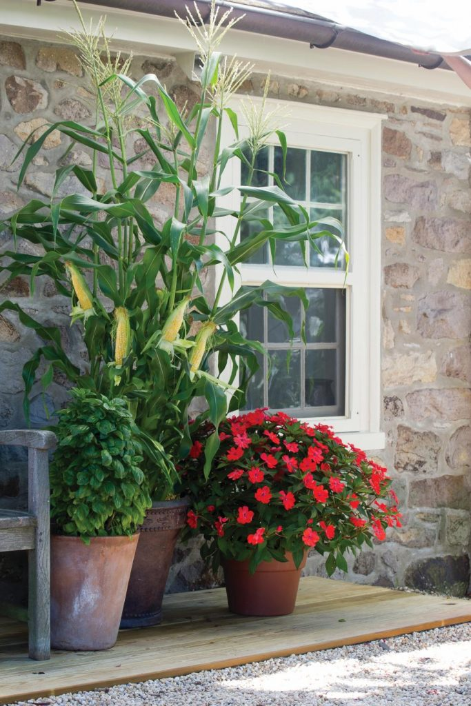 31 ideas for vegetable gardens and gardens (27)