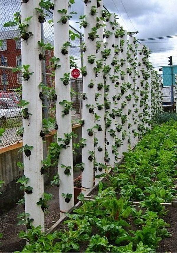 34 idealdiy vertical Vegetable garden (17)