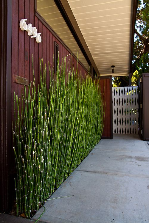 40 interior ideas for bamboo decoration (4)