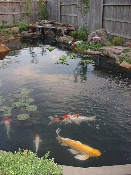 46 beautiful fish pond ideas (16)