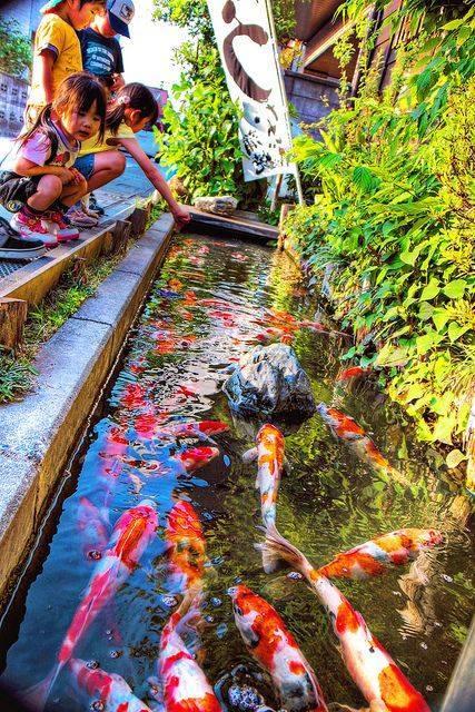 46 beautiful fish pond ideas (39)