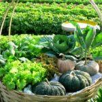เหตุผล 5 ประการ ที่ไม่ควรลาออกจากงานประจำ มาทำการเกษตรเป็นอาชีพหลัก