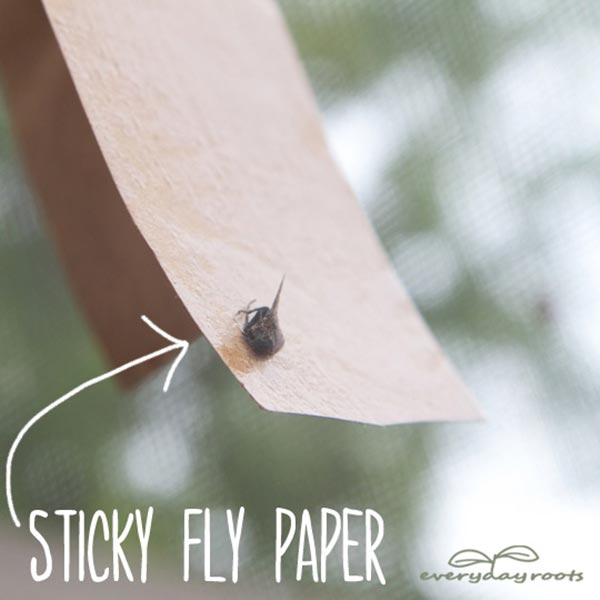 9 ways to eliminate a horde of flies (4)