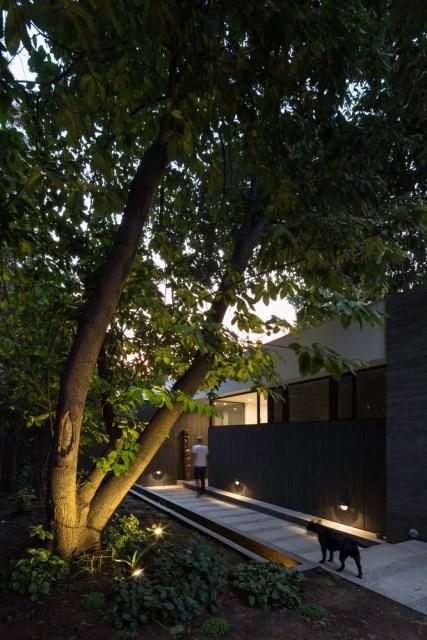 Modern house modern materials between nature (3)